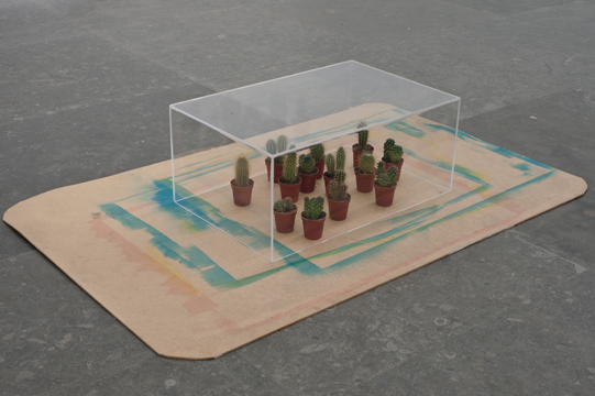 Box, Cactus and Board, 2011, Acylic on wood, perspex box and cactus, 34x120x78cm